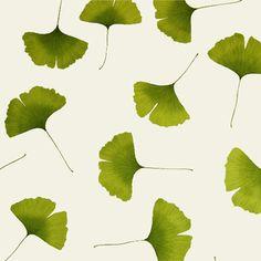 Marimekko vintage wallpaper featuring ginko leaves.