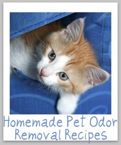 Homemade Pet Odor Removal Recipes And Ideas-  Hey they happen when you have 7 animals or live in an old rental house where the previous tenant left their dogs locked in a room with carpeting.  Trying this out this weekend.