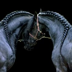 I love animals. Especially horses and puppies. So, except for 1 momentary lapse in judgement, animals are what you will see here. Horses And Dogs, Cute Horses, Horse Love, Most Beautiful Horses, All The Pretty Horses, Animals Beautiful, Horse Mane Braids, Horse Hair Braiding, Horse Photos