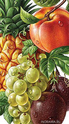 Illustrations with products: beautiful fruits, berries, vegetables, food Vegetable Illustration, Fruit Illustration, Illustration Artists, Food Illustrations, Botanical Drawings, Botanical Art, Vintage Gardening, Art Folder, Fruit Painting