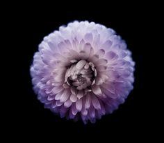 """Flowers in my Wonderland"" by Viera Babecova. Artistic Photography, Image Photography, Fine Art Photography, Documentary Photography, Travel Light, Smell Good, Photojournalism, Cool Art, Wonderland"