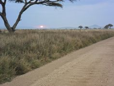 THEME FOR GREAT CITIES: Before Night Falls in the Serengeti