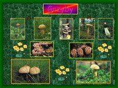 PPT - Warstwy lasu PowerPoint Presentation - ID:4253051 Presentation, Teacher, Professor, Teachers
