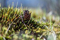 https://flic.kr/p/EZyYR8 | Tavasz...én így szeretlek! | Zemplén hegység kincsei...