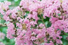 Color me pink