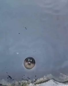 Cute Little Animals, Cute Funny Animals, Funny Cute, Cute Seals, Funny Animal Videos, Ocean Life, Animals Beautiful, Pet Birds, Animals And Pets