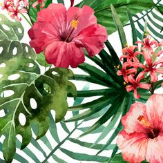 Poster - Tropical Flowers