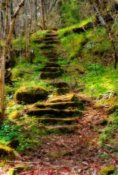 Walk where you like your steps, do as you please; I'll back you up........