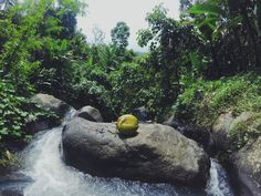 Waterfall lombok #lombok #travel #coconut