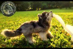 Lifelike Wolf cub... How, just--- how?