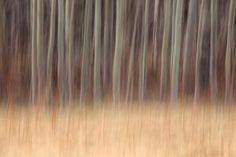 Projet forêt 9604