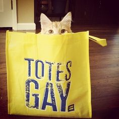 Adorable cat in a #HRC bag.  www.hrc.org