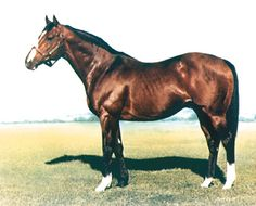 Northern Dancer, one of the greatest Thoroughbred sires of all time!