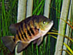 ... Fish Care --- How to Treat Pet Fish Diseases and illnesses With Non