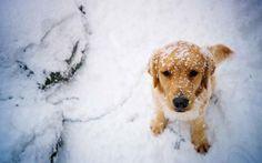 ¿Por qué a los perros les gusta tanto la nieve?