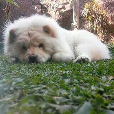 Cute Qaiser on grass :p