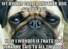 Is this what you tell all the other pugs?