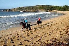 go horse back riding on the beach