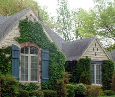 ivy clad outdoor living space with debra phillips and finding your personal style