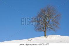 #Winter #Landscape #Tree With #Snow And #Blue #Sky @Bigstock #bigstock #nature #season #outdoor #bluesky #austria #carinthia #stock #photo #portfolio #download #hires #royaltyfree