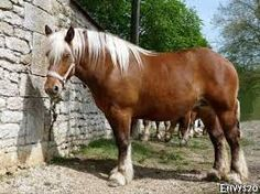Image result for draught horses