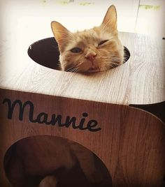 Oh my goodness  Mannie is so gorgeous!  look at that cute face  thank you so much!  #cat #catsofinstagram #cats_of_instagram #catfurnature #catfurniture #catsinboxes #cattoy #INSTACAT_MEOWS #cutecat #PurrMachine #catsinboxes #catbox #Excellent_Cats #BestMeow #dailykittymail #thecatniptimes #catcube #catpod #ArchNemesis #FlyingArchNemesis #myindoorpaws #ififitsisits #cutecatcrew #catchalet #catnip #themeowdaily #kitty #dailykittymail #catgrass