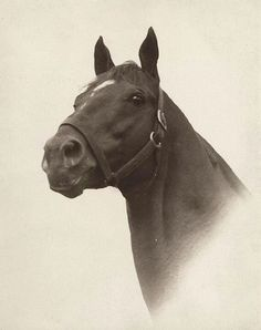 Man O'War.  My favorite portrait of Big Red. The illustrator C. W. Anderson did a similar pencil drawing of Man O' War.