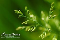 Photo green grass by Bertrand K. on 500px