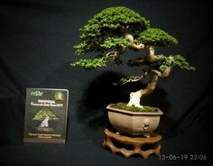 Bonsai Art, Bonsai Trees, Planter Pots, Inspiration, Gardens, Aquariums, Terrariums, Plants, Spirit