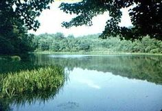 BRINTON BROOK SANTUARY offers three miles of hiking trails through a wide variety of habitats. The trails of Brinton Brook Sanctuary connect to the Highland Trail, part of the Croton-on-Hudson village trail system.
