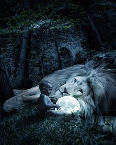 The moon was so beautiful that the the little boy held up a mirror. by Marcel van Luit Van Luit Wild Animal Wallpaper, Lion Wallpaper, Bild Gold, Animals Beautiful, Cute Animals, Lion Love, Lion Painting, Surreal Photos, Lion Pictures