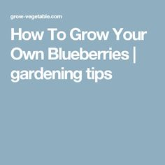 How To Grow Your Own Blueberries | gardening tips