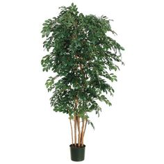 This listing is for 1 pack. You will receive 2 items per pack, 1 item shown in picture. Height - 6'. Leaves - 2,842. Pot - Includes Shown Non-Decorative Plastic Pot.