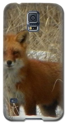 #926 D762 Salisbury Beach State Reservation Fox On The Hunt Samsung Galaxy S5 case by ROBIN LEE MCCARTHY PHOTOGRAPHY.  Protect your Galaxy S5 with an impact-resistant, slim-profile, hard-shell case.  The image gets printed directly onto the case and wrapped around the edges for a beautiful presentation.  Simply snap the case onto your Galaxy S5 for instant protection and direct access to all of the phones features.