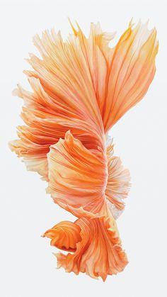 iphone 6s fish pink wallpaper ios9alt