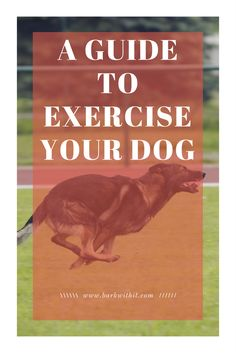 Exercising German Shepherds How to exercise your dog