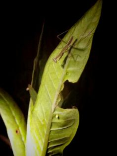 Mantis and Monarch egg