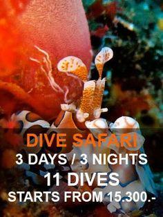 Similan islands diving liveaboard 3 days - 3 nights https://similandivecenter.com/list/liveaboards.html