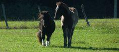 Qui suis-je ? - Cheval émoi-Equitation éthologique en Haute-Garonne et Ariège
