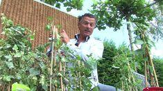 Klimplant tegen schutting - Tuinieren.nl