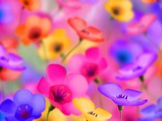 Free Download  Best Peach Flower HD Wallpapers  1600×1200 Best Flowers Wallpapers HD (53 Wallpapers)   Adorable Wallpapers