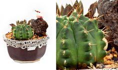 Jardins de Inverno ou Internos!!! E 20 Plantas ideais para ambientes fechados!