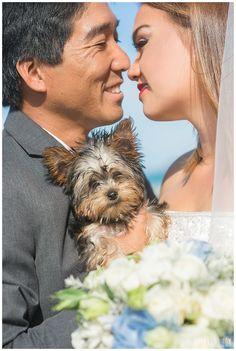 We can't handle the cuteness! Dog in wedding idea from a Hawaii Beach Wedding! Yorkie wedding inspiration