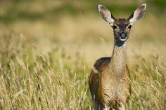 The elk | Free Photo #Freepik #freephoto #animal #deer #field #wild Sketch Background, Winter Background, Landscape Background, Hirsch Illustration, Deer Illustration, Male Deer, Hunter Logo, Deer Drawing, Watercolor Deer