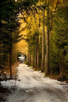 Country road, snow