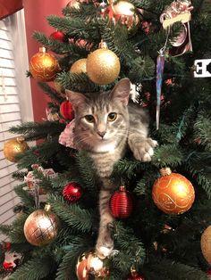 63 new ideas funny christmas animals kittens Dog Christmas Pictures, Funny Christmas Tree, Christmas Kitten, Snow Pictures, Christmas Animals, Christmas Ideas, Funny Pictures, Funny Dogs, Funny Animals