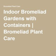 Indoor Bromeliad Gardens with Containers | Bromeliad Plant Care