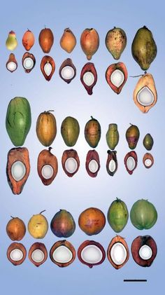World Coconut Day – We Introduce You this Magical Fruit! – Happening Tday