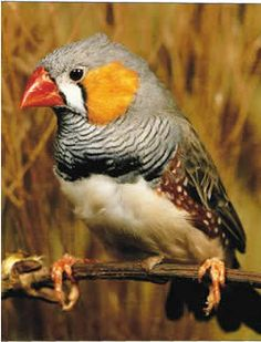 My pair of Zebra finches are named Mr. and Mrs. Robinson!!!