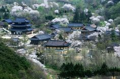S Korea in Spring, Geumsansa Temple (Jeollabuk-do Gimje)